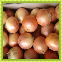 factory price China 7-9cm Fresh red yellow onion