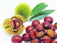 2015 new crop fresh organic chestnuts for sale