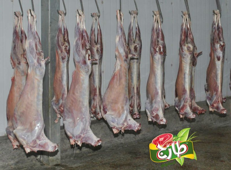 Frozen Halal Mutton (Sheep)