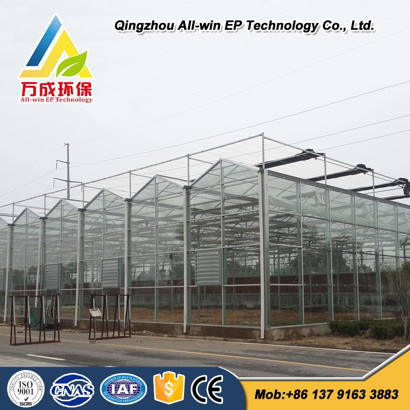 Cheap Agricultural Glass Greenhouse used for vegetable/flowers