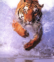 DIY 5D Diamond Embroidery Painting&Rhinestone Diamond Painting With Running Tiger Design