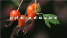 Vitamin C & polyphenol antioxidant rose hip extract 4.5%
