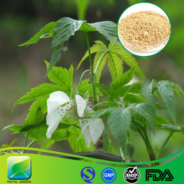Best Raw material Organic Stevia Extract 85% stevioside pure powder