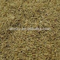 Cumin seed 2011 New crop
