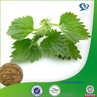 High quality Nettle root extract powder (Urtica Dioica), Silic Acid/Beta sitosterol 5:1,10:1, 20:1