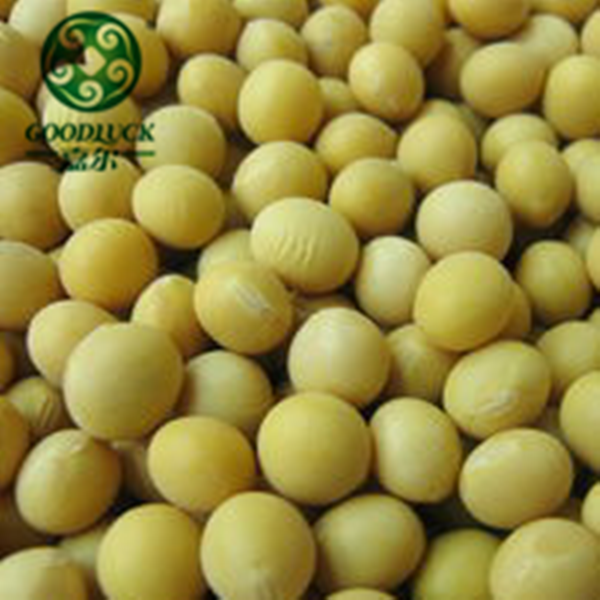 Specification of Buyer Soya Bean for Milk or Seeds