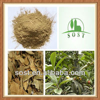 Natural Loquat Leaf Extract Herbal Product