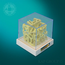 Medical bone cube,plastic bone skeleton bone density cube