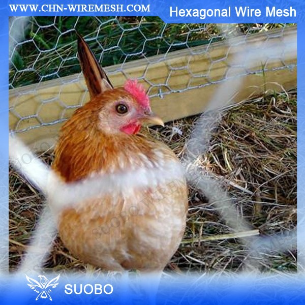 Galv. Hexagonal Wire Mesh Cheap Chain Link Dog Kennels Pvc Coated Chicken Wire Mesh