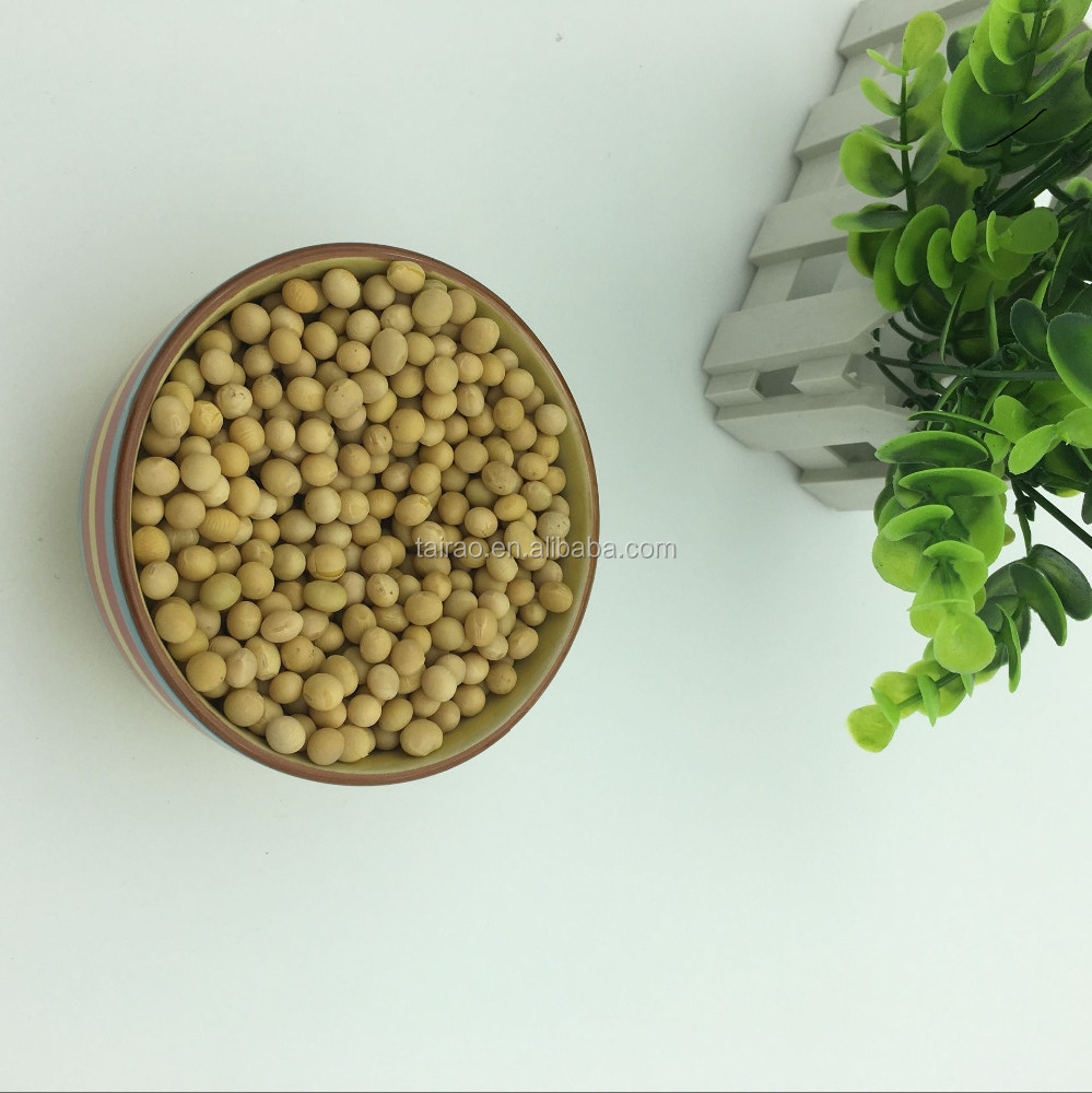 high protein lecithin cultivated soybean