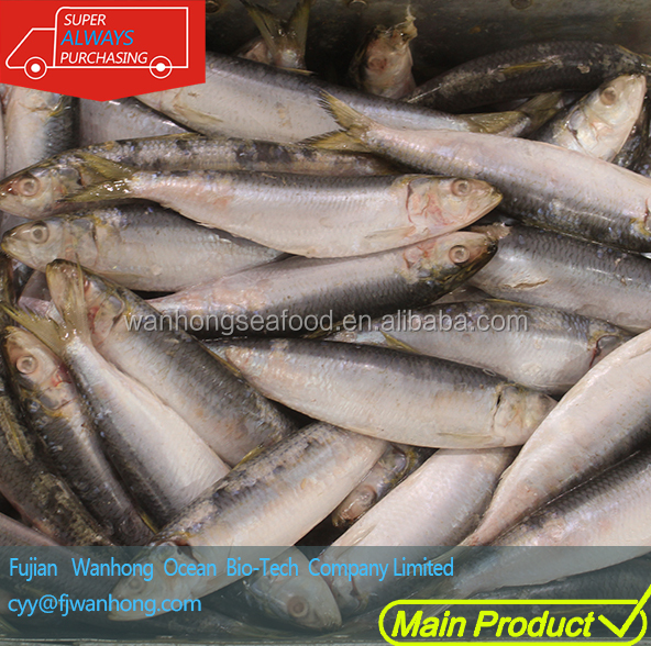 frozen seafood best whole round sardines brand for canning,frozen fish for sale importer fishing