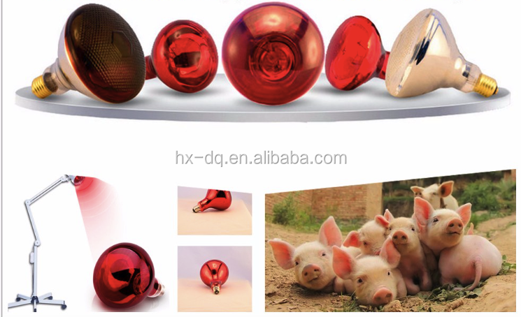 animal husbandry infrared heaters infrared heating lamps in cold winter