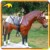KANO6038 High Quality Life-Size Fiberglass Horse Statues