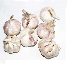 wholesale fresh qingdao garlic specification