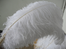 cheap ostrich feather for wedding decoration