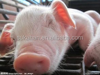 Bacillus,lactobacillus,vitamin,growth stimulating factor for Piglet Gain Weight