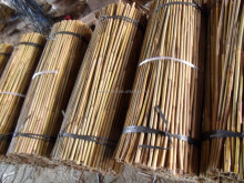 Bamboo Canes For Tree Guards,60 cm, Dia.10-12mm
