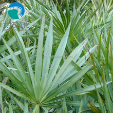 China Factory Supply High Quality Herbal Plant Serenoa Repens/Saw palmetto Extract 25%; 45%