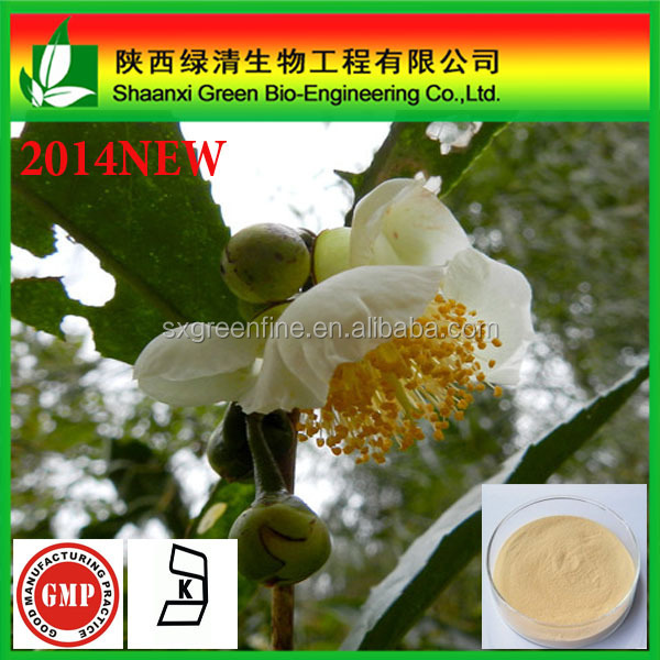 Wholesale price camellia seeds extract tea saponin 90%