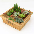 Zakka wood retro square plant holder for plants and flowers
