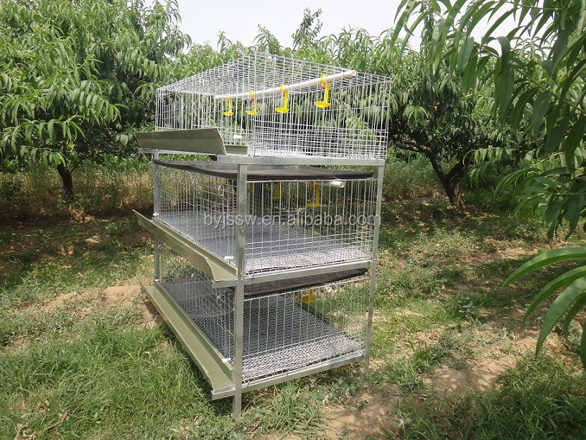 H Type Broiler Chicken Cages Wholesale (Made In China, Discount Price)