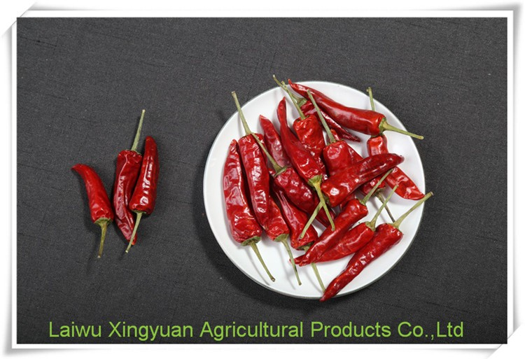 High quality organic chinses red chili pepper san ying jiao