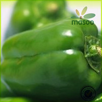 fresh green habanero peppers exporter in China