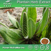 Seed Plantain Extract Powder (4:1 5:1 10:1 20:1)