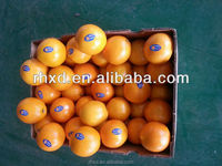 egyptian navel orange/2015 Sweet Fresh mandarin orange/fresh valencia oranges for sale