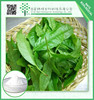 Weight loss products green tea extract