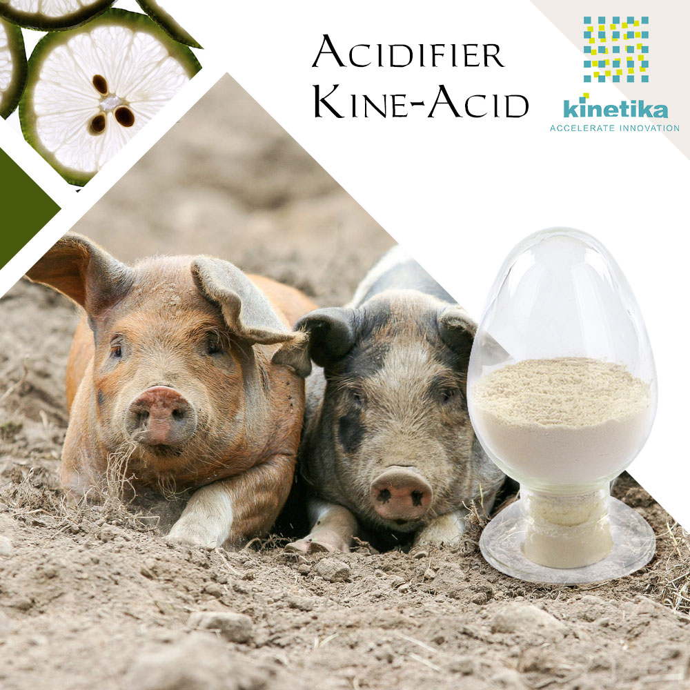 Feed additives acidifier for poultry health care products as animal nutrition china factory