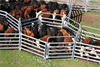 Hot dipped Galvanised 2.1m*1.8m oval pipe square tube steel sheep cattle yard panels hot sale