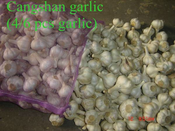 fresh pure white garlic 2017 new crop