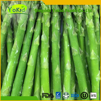 Frozen new crop green asparagus