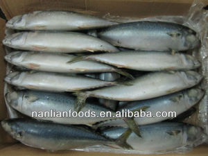 400-600g frozen whole round mackerel fish