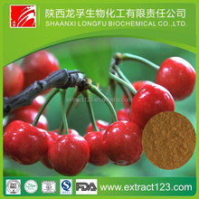 Pure high quality of 100% Natural Tart Cherry Extract