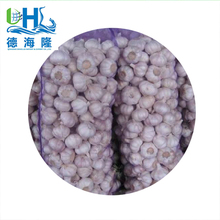 Shandong Fresh Garlic normal white and pure white with best quality