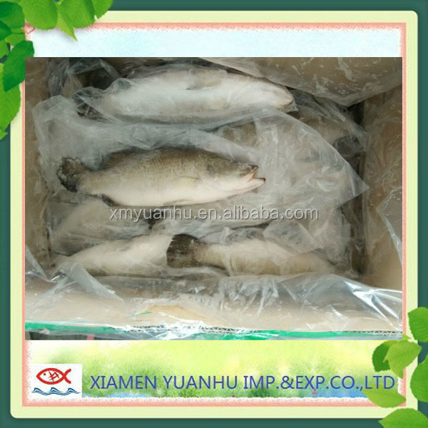 seafood companies barramundi fish whole round farm in fish