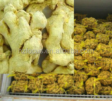 factory supply good quality whole dry ginger