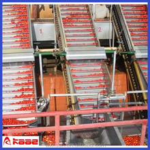 Turn key solution concentrate fruit juice processing production line
