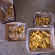 150g New crop Chinese fresh ginger