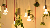 Decorative Hanging Pendant Light Twisted Energy Saving Bulb With Sky Planter Flower Grass Pendant Light