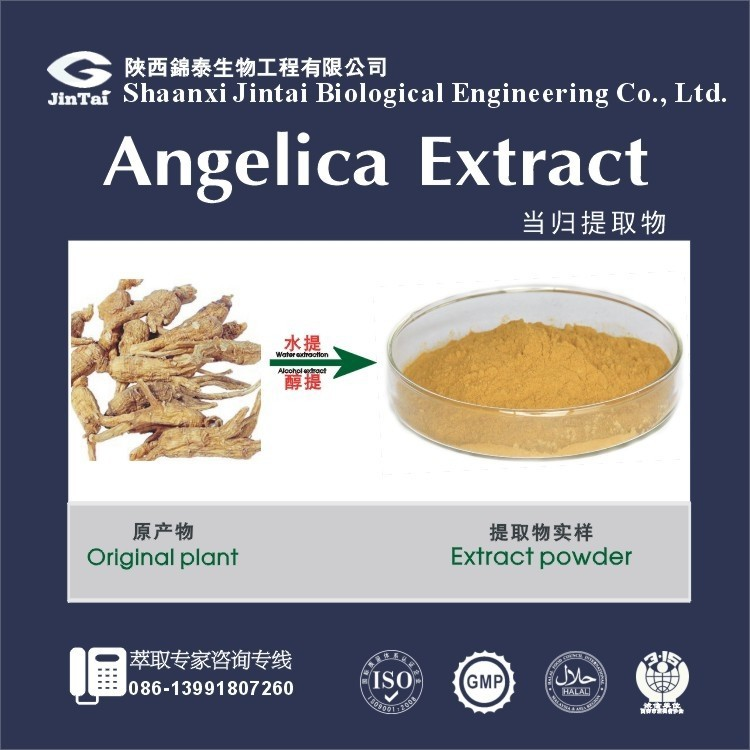 pure natural hot sale angelica extract