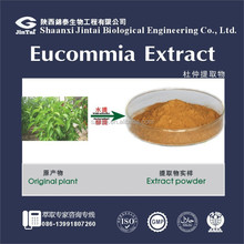 Lowering blood pressure remedy Eucommia Ulmoides Oliver Extract / Antitumor P.E. 98% Chlorogenic Acid