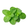 hot sale high quality customized spearmint