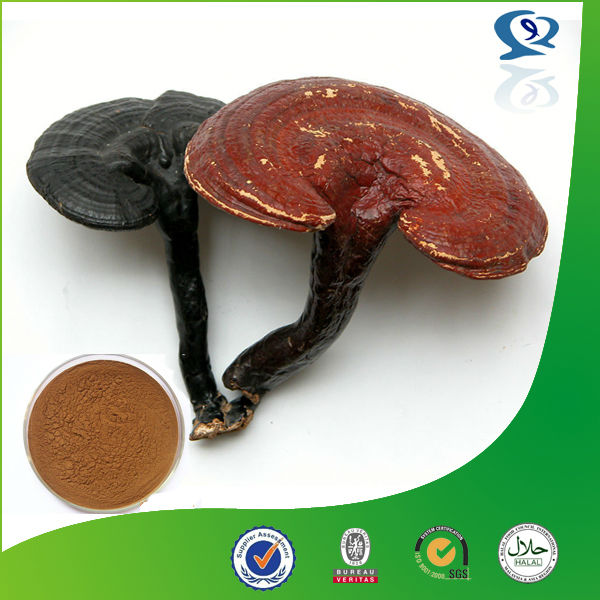 100% Natural Sex products 10-30% Polysaccharide UV Reishi Mushroom Extract