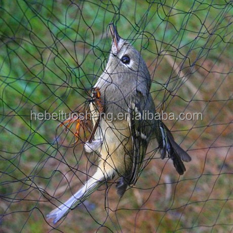Bird capture net,mist net for catching bird