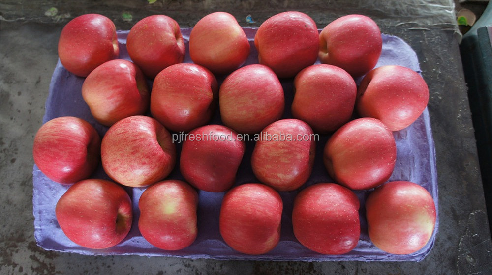 fresh fuji apples 2016 crop