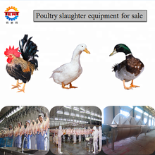 Automatic stainless steel chicken slaughter equipment for sale