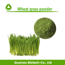 Natural dietary fiber wheat grass powder /wheat grass juice powder free sample